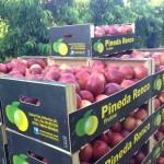 Frutas Pineda Renco