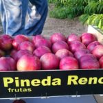 Pineda Renco Frutas